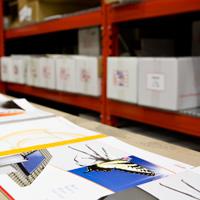 gfp gestione e distribuzione